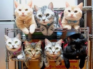 image_3_RE_How_to_store_and_organize_cats-s400x300-42085